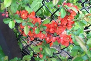 blogredflowers